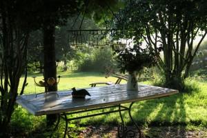 Sol sobre la mesa llena de agua de lluvia / Aceytuno