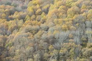 Bosque de As Nogais / Aceytuno