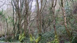 Bosque de ribera a la orilla del río / Aceytuno