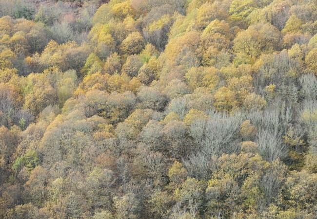 Día de la Poesía y de los Bosques