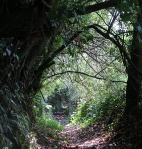 Túnel de luz del bosque / Aceytuno