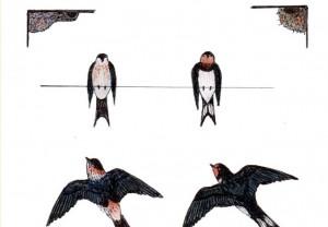 Ilustración de Antonio Morcuende / Aceytuno