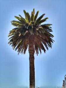 Palmera, sol verde del cielo / Aceytuno